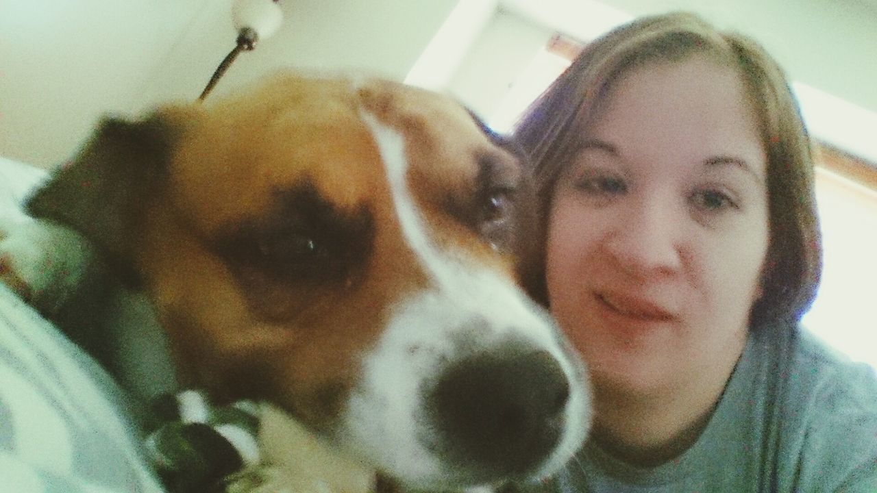 Dogmom Taking Photos Hanging Out Enjoying Life That's Me Sammythebeabull Onfacebook Sammy♡ Baby ❤ When Boredom Strikes. Relaxing Supernatural Happybeabull RePicture Growth Hello World