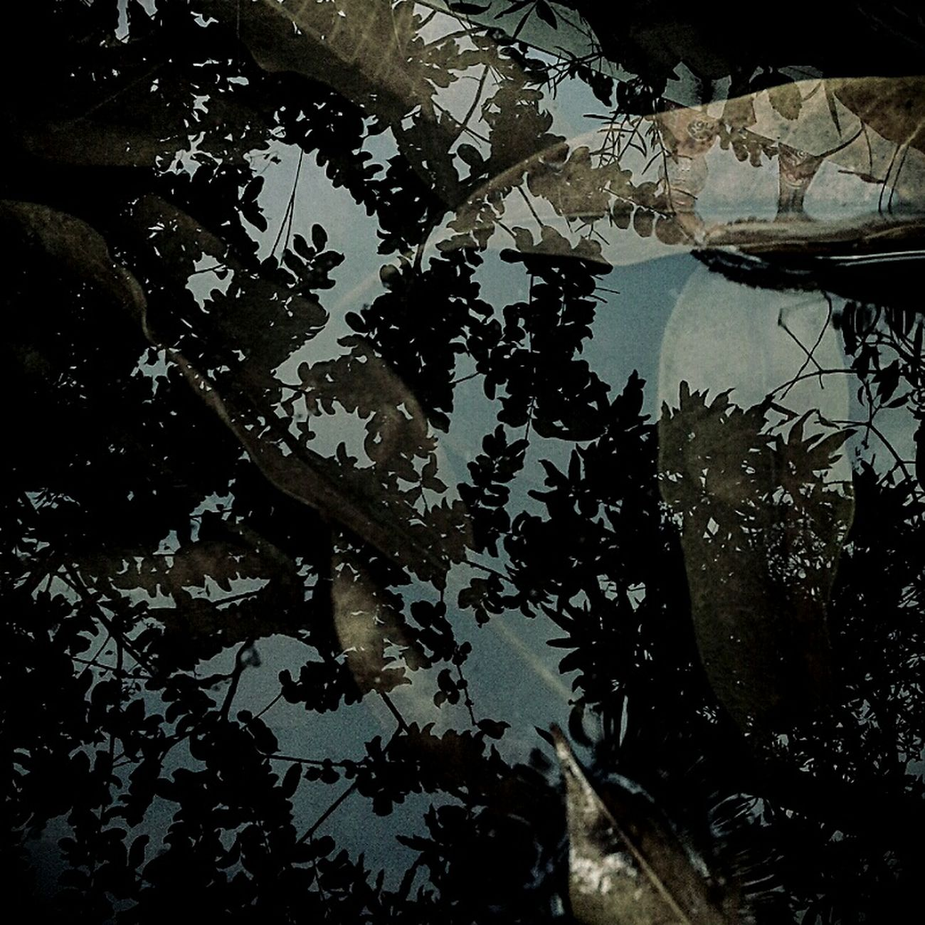 S I K L U S. Reflection Water Nature Tree Stockphoto In2nature Moodygrams Roaming Around Folk Folkgood Leaves Androidography Thetrickytree Autumnbeauty Fine Art Killingtime Hometown INDONESIA Jakarta Nusantara First Eyeem Photo