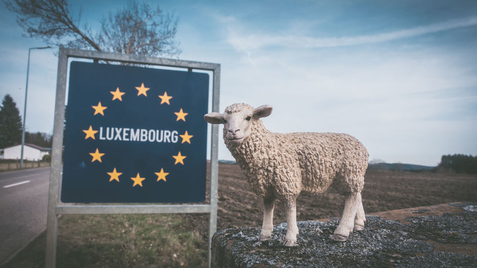 2017, Julie Gatto Animal Themes Boarder Day Europe Flag Luxembourg Luxembourg_Collection No People Outdoors Sheep Sky
