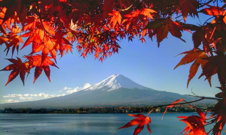 EyeEm Best Shots - Autumn / Fall 富士山 Aroundtheworldbyluftansa Aroundtheworldbylufthansa