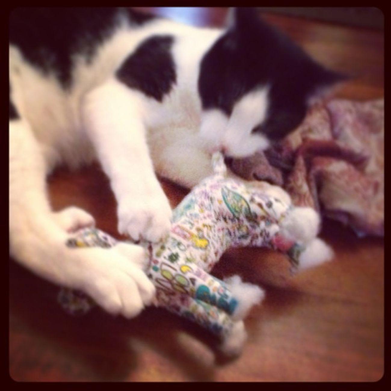 Puppies beware! Richardthecat is on the prowl! Catsofinstagram Catsanddogs