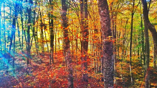 Nature Nature Photography Forest