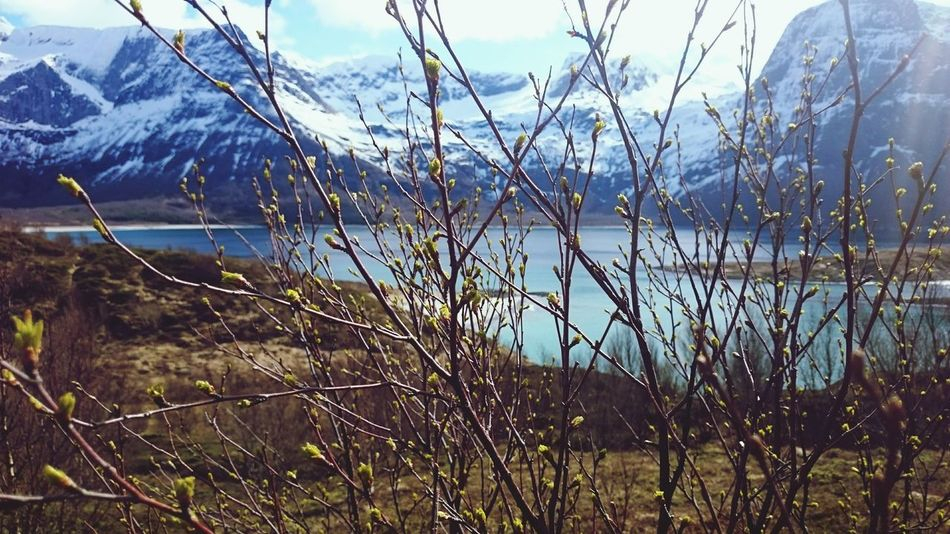 Spring is here Northofnorway Sea Mountain Landscape Nature