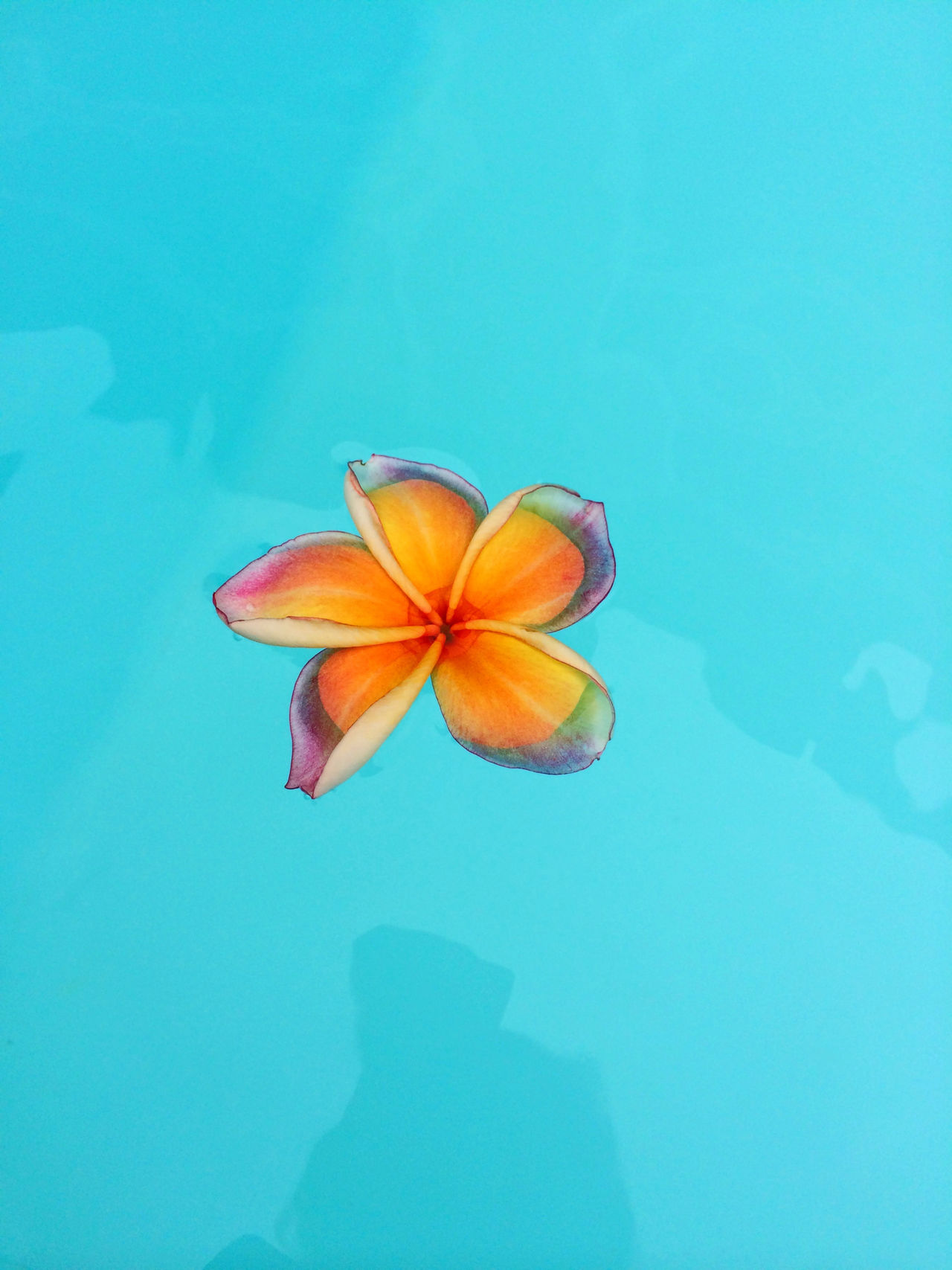Beautiful stock photos of bangkok,  Beauty In Nature,  Blue Background,  Day,  Floating On Water