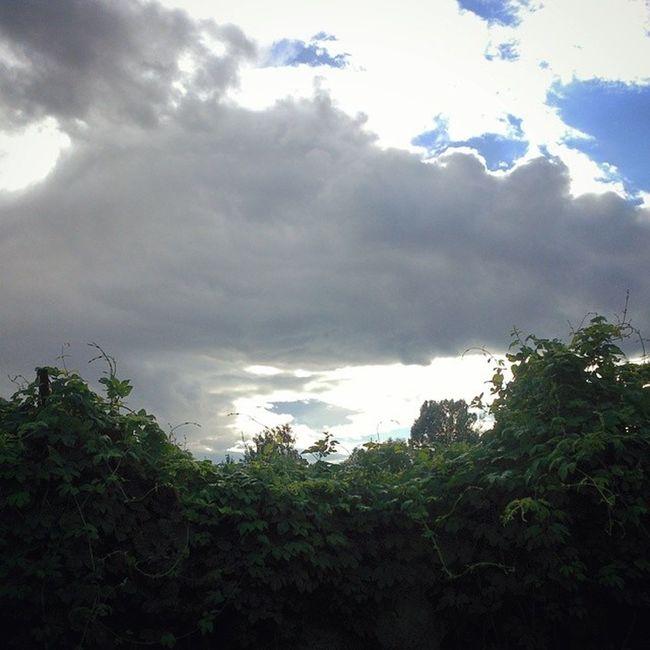 В любой непонятной ситуации - зарастай сырец Киев город Syrets forest forest_trip лес дневник_наблюдателя kiev insta_kiev kievblog thekievblog wowkiev kievgram природа nature небо облака clouds sky