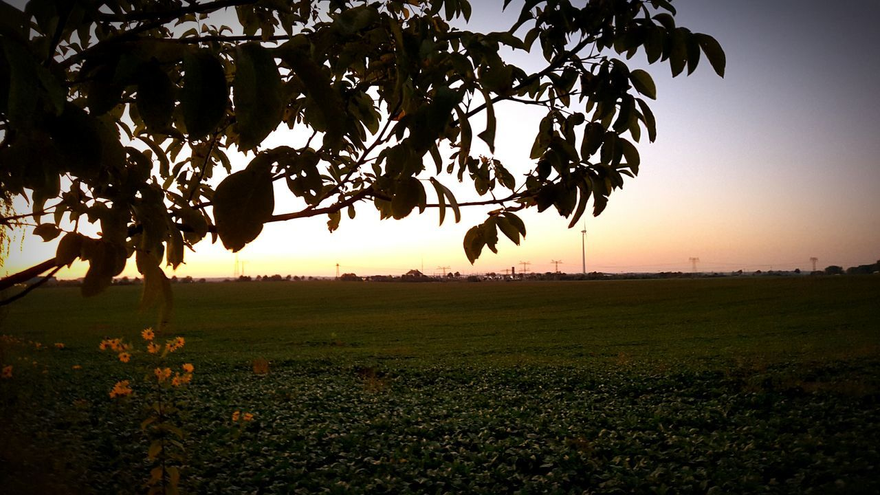 tree, field, nature, sunset, landscape, growth, tranquil scene, grass, beauty in nature, tranquility, scenics, outdoors, agriculture, no people, leaf, plant, rural scene, branch, sky, clear sky, day