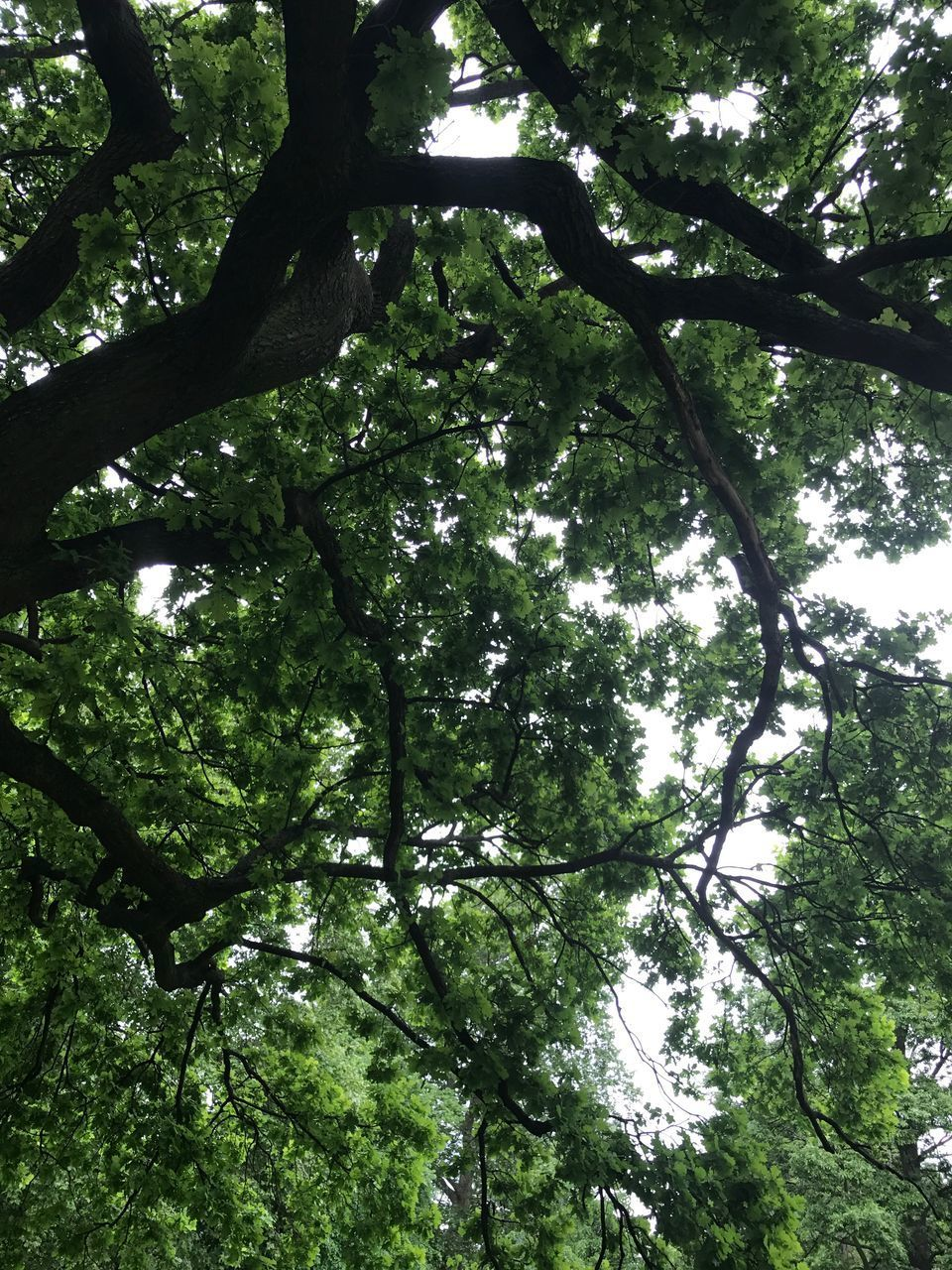 tree, low angle view, nature, forest, branch, day, growth, green color, no people, outdoors, beauty in nature, tranquility, high