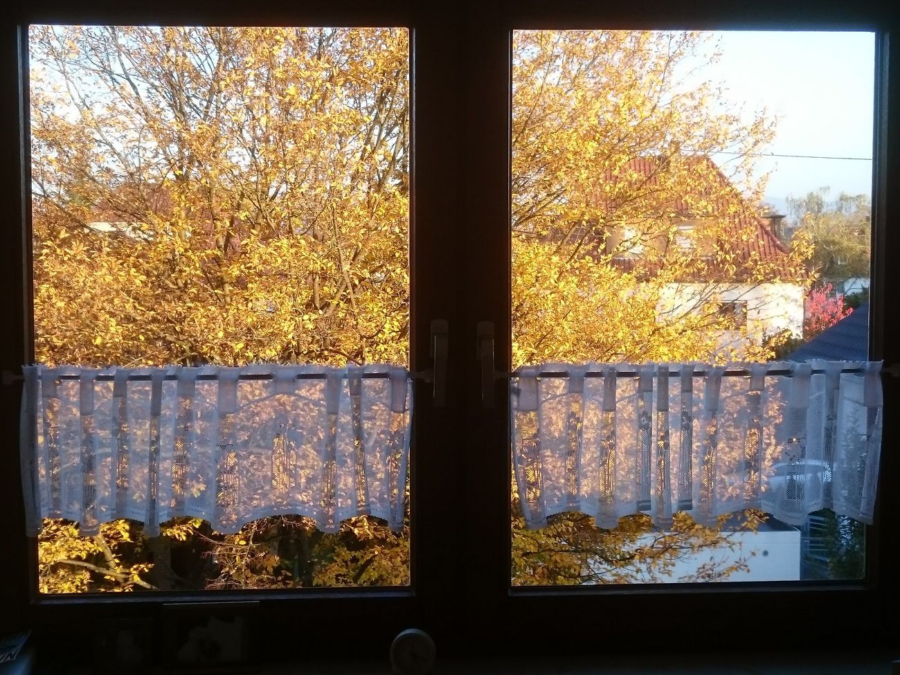 Window Transparent Indoors  No People Sky Nature Tree Sunlight And Shadows Colors Of Autumn Colorful Colour Of Life Autumn Autumn Leaves Authentic Moments Autumn🍁🍁🍁 Fall Colors Fall