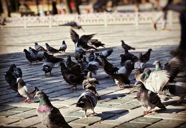 Vscoturkey Vscoturkiye Vscoistanbul Vscocam Istanbul Istanbullovers Guvercin Instaturkey Instaturk Instaturkiye Turkinstagram Turkinsta Turkishfollowers Igersturkiye Igersturkey Igersistanbul Instagramturkey Instagramtr Instagramturkiye Durdurzamanı Durdurzamani Anıyakala Sultanahmet