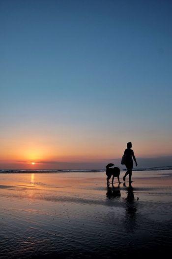 Beach Sunset Silhouette Walking Dog Bali INDONESIA First Eyeem Photo The Week On EyeEm