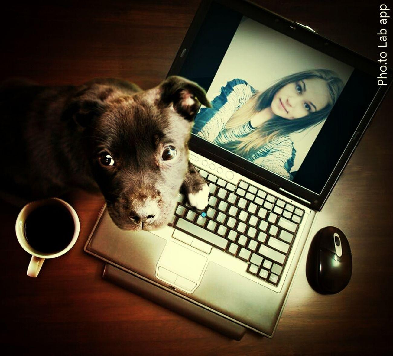 Takiepiekne Mydog ♥ Mycoffee