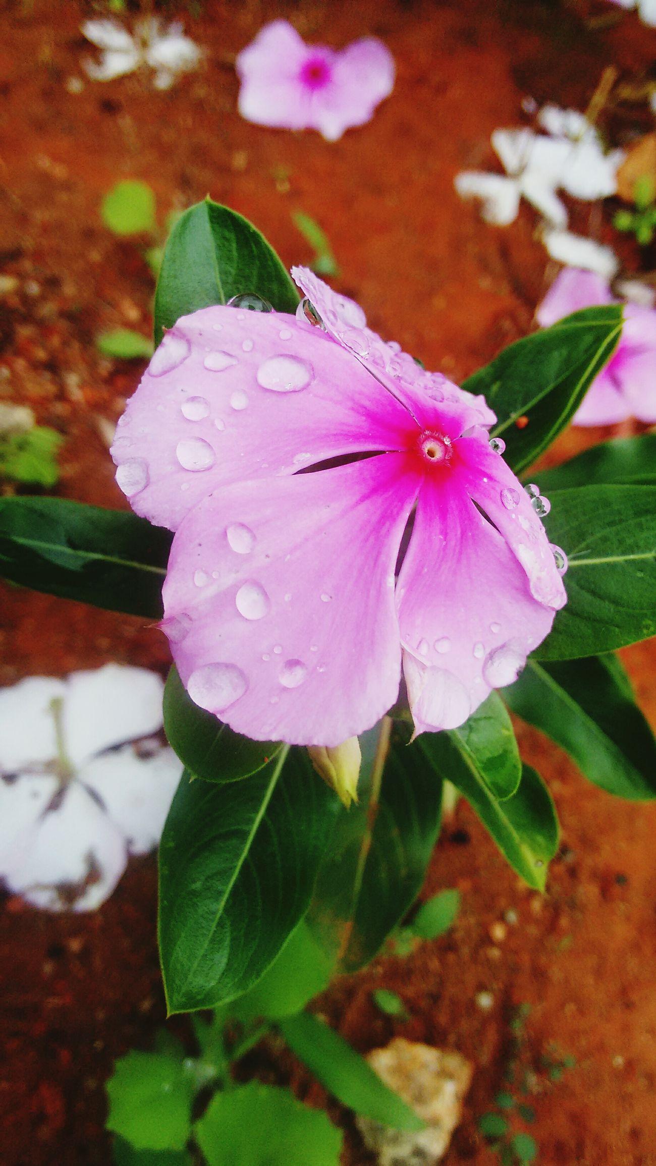 Que Florzinha Linda Achuvachegou Deixando Tudo Mais Bonito Gotas Da Chuva Amomuito