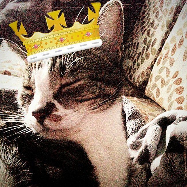The true Kitteh King. RussellBrand