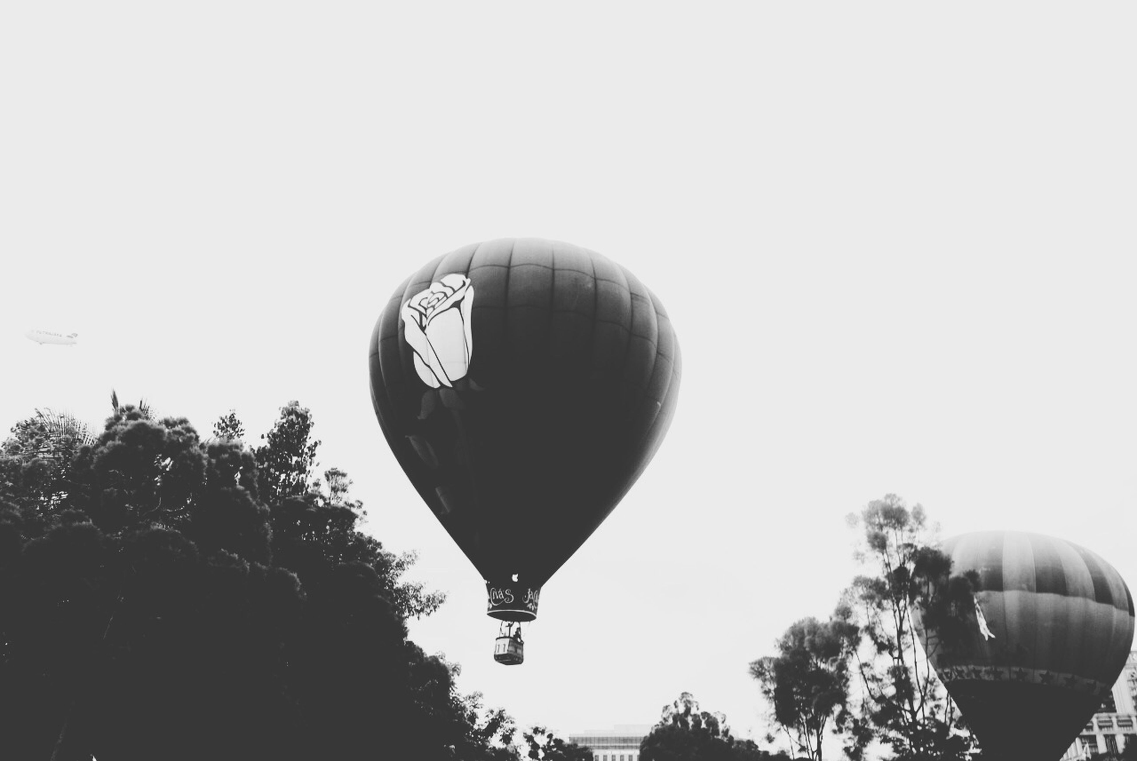 low angle view, clear sky, tree, sphere, hot air balloon, mid-air, copy space, sky, flying, lighting equipment, outdoors, street light, hanging, moon, celebration, balloon, no people, day, decoration, nature