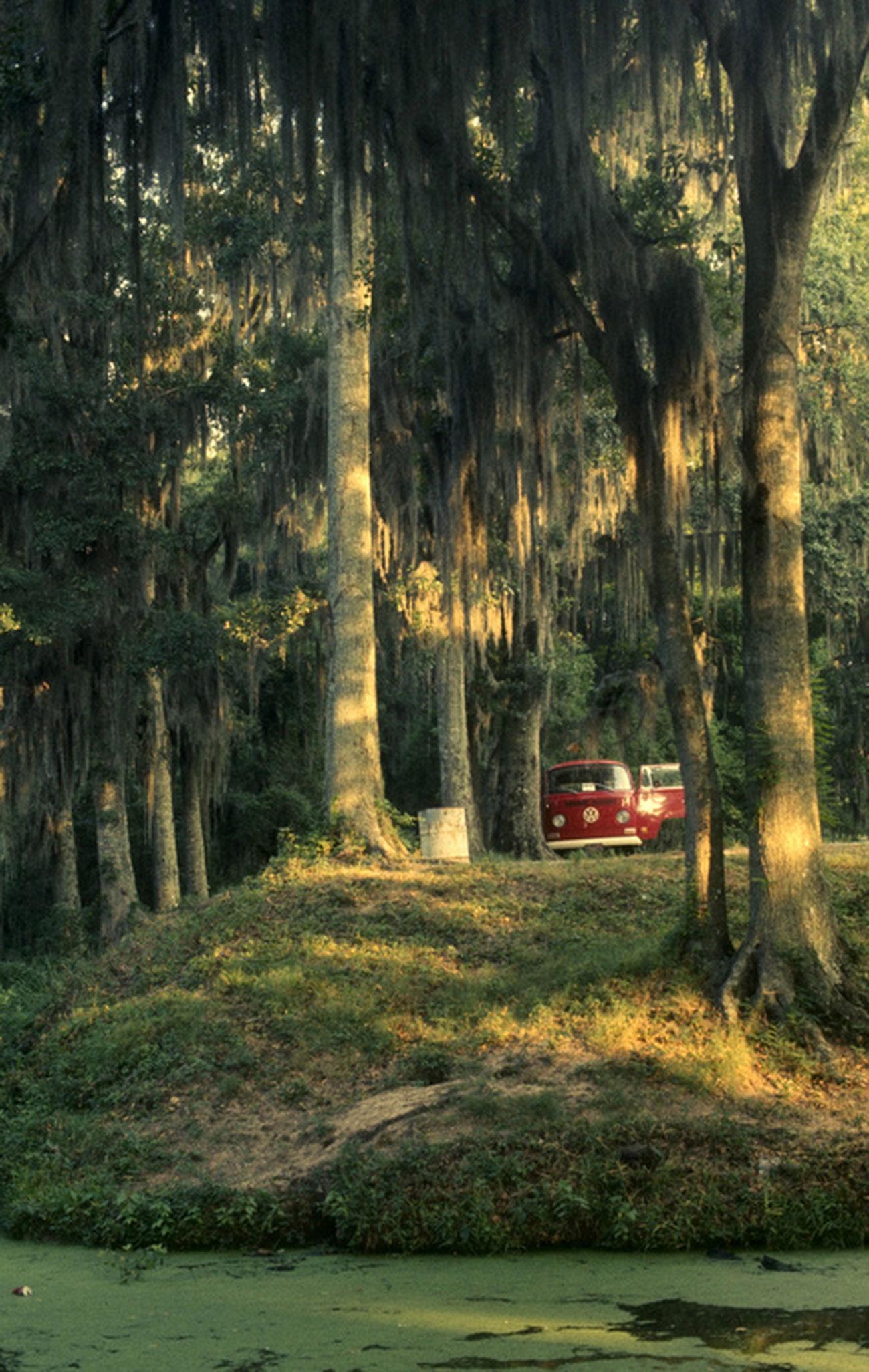 Karavan Doğa Orman Huzur Forest Mutluluk