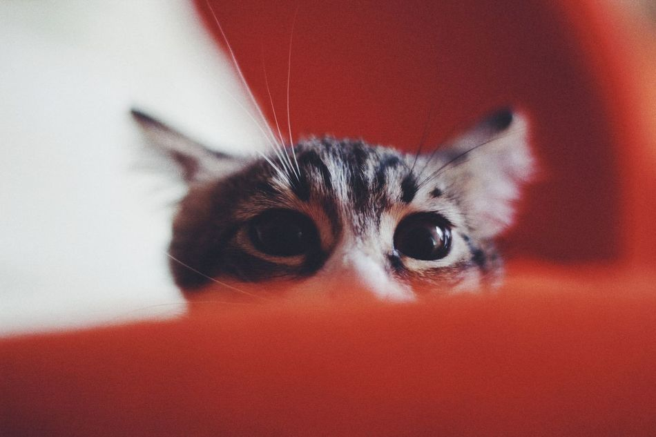Beautiful stock photos of cat, Animal Body Part, Animal Eye, Animal Themes, Close-Up