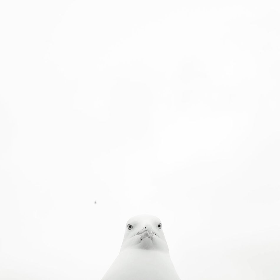 Beautiful stock photos of dove, Animal Body Part, Animal Eye, Animal Head, Animal Themes