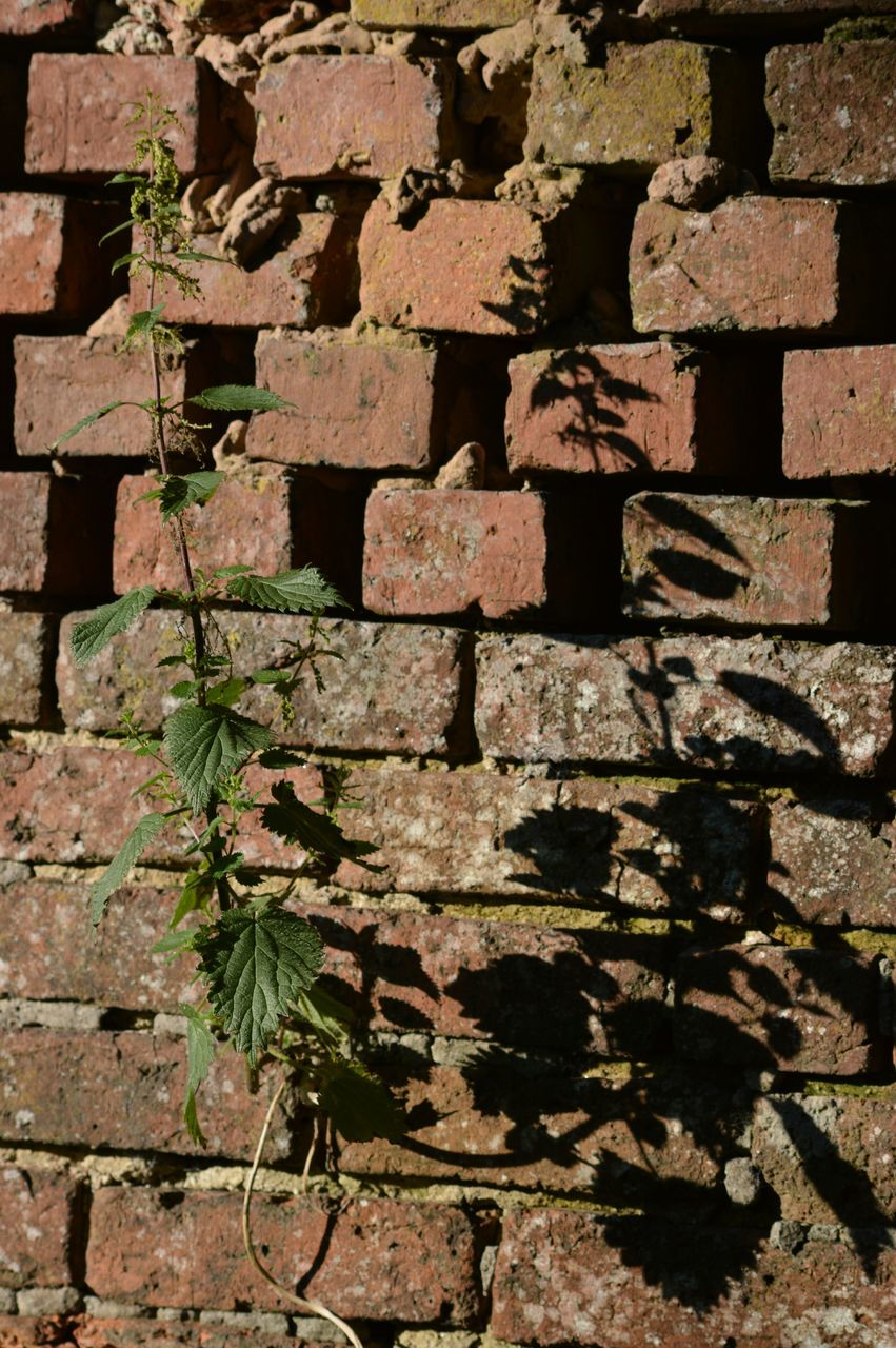 Plant Growing On Brick Wall