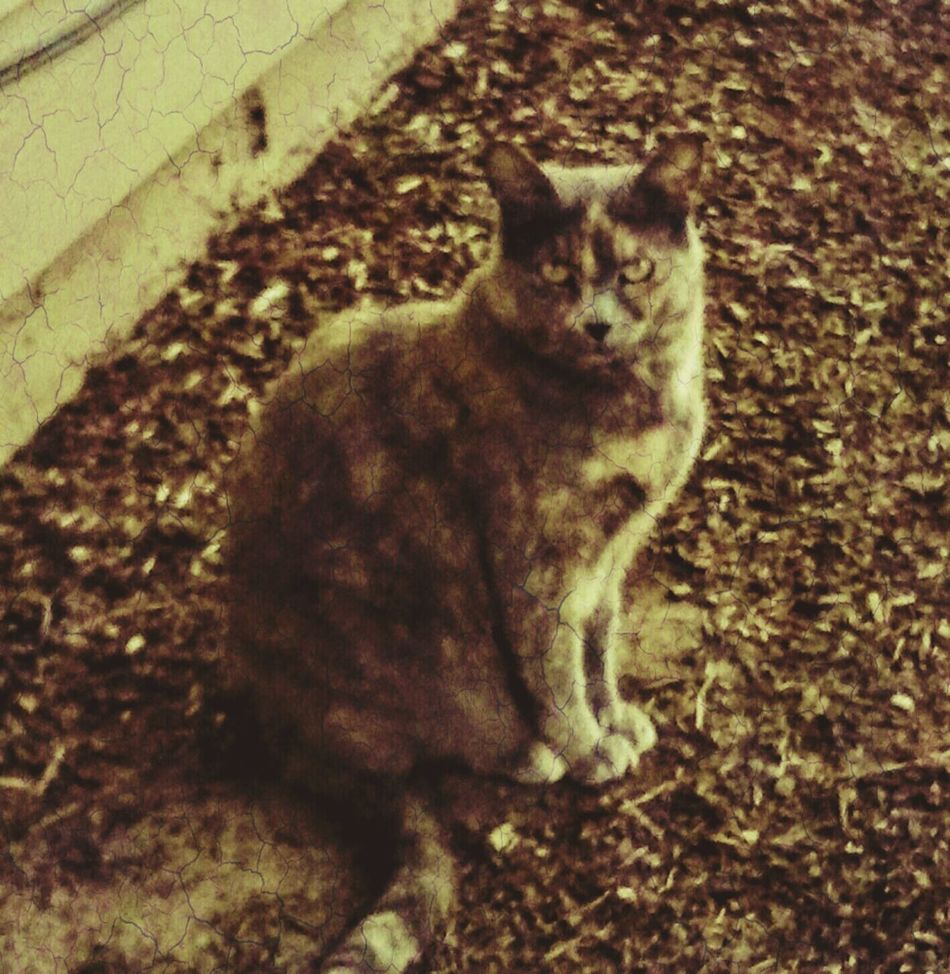 My Cat Is Cooler Than Your Kids! My Kitty <3 My Kitty Cat ♡ Peekaboo Shes So Silly! My Pet Family Member Mouse Catcher I Like My Own Pictures!✌😎 Domestic Animals My Cat My Pet Cat My Buddy Oregon Beauty Animal Meow🐱 Peek A Boo Peekaboo Cat Pacific Northwest  Love Photography EyeEm Gallery Color Of Life! Amateur Photography Streamzoofamily Summer Time