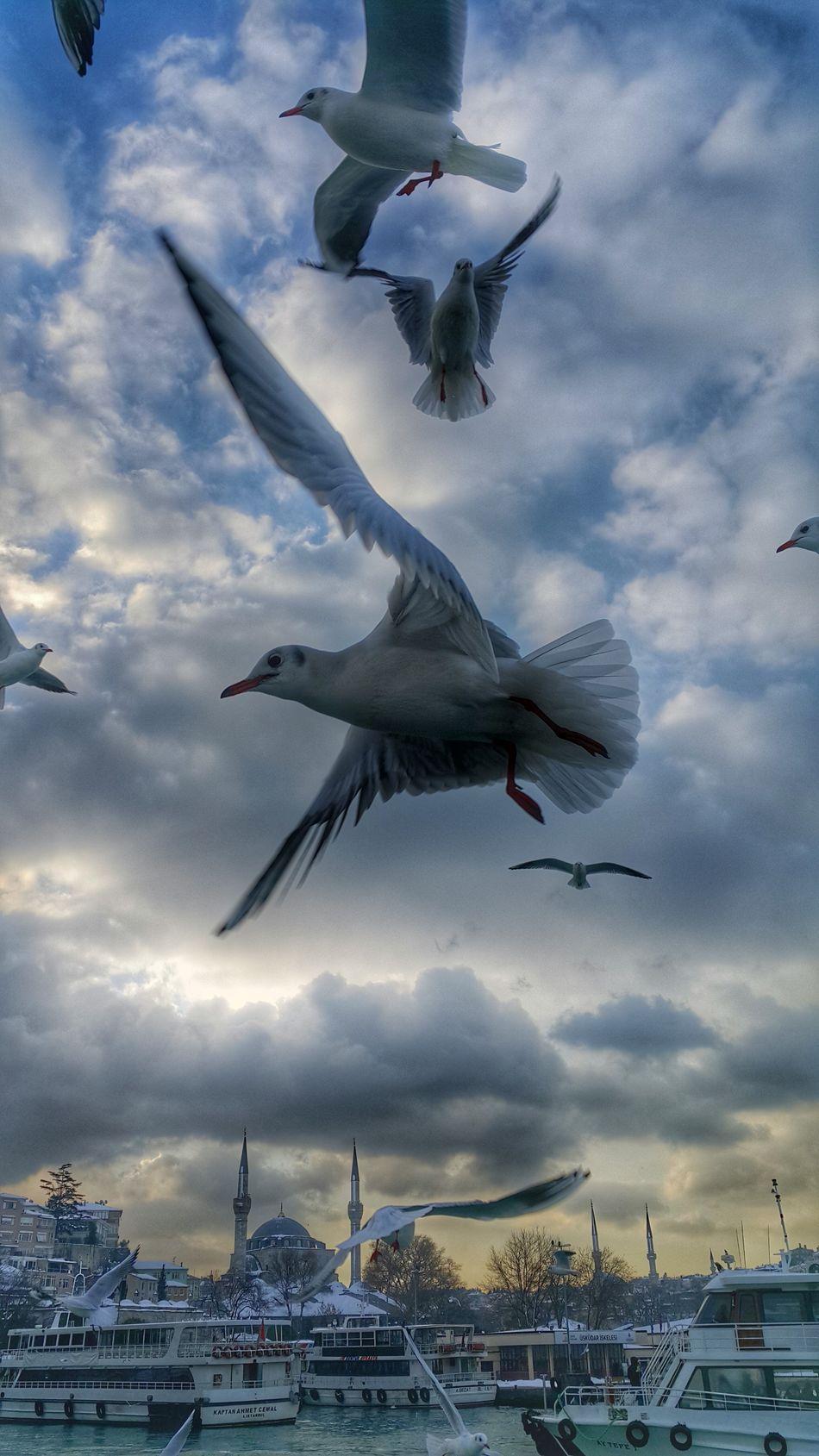 ıstanbula Kar Nede Güzel Yakisti Aniyakala Insan Zamani Durdurmak Istedigi Yere Aittir Objektifimden Istanbuldayasam EyeEm GalleryEyeEm Best Shots DramaticClouds Seabirds Flaying Fotografduragim Bosphorus Cityphotography EyeEmBestPics Fotografaski Kadrajimdan