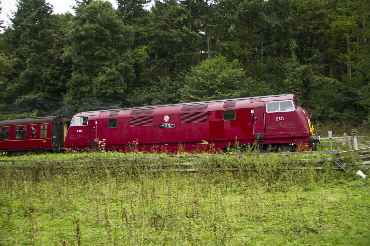 transportation, train - vehicle, public transportation, rail transportation, mode of transport, railroad track, tree, red, day, outdoors, locomotive, land vehicle, no people, grass, nature, steam train, sky