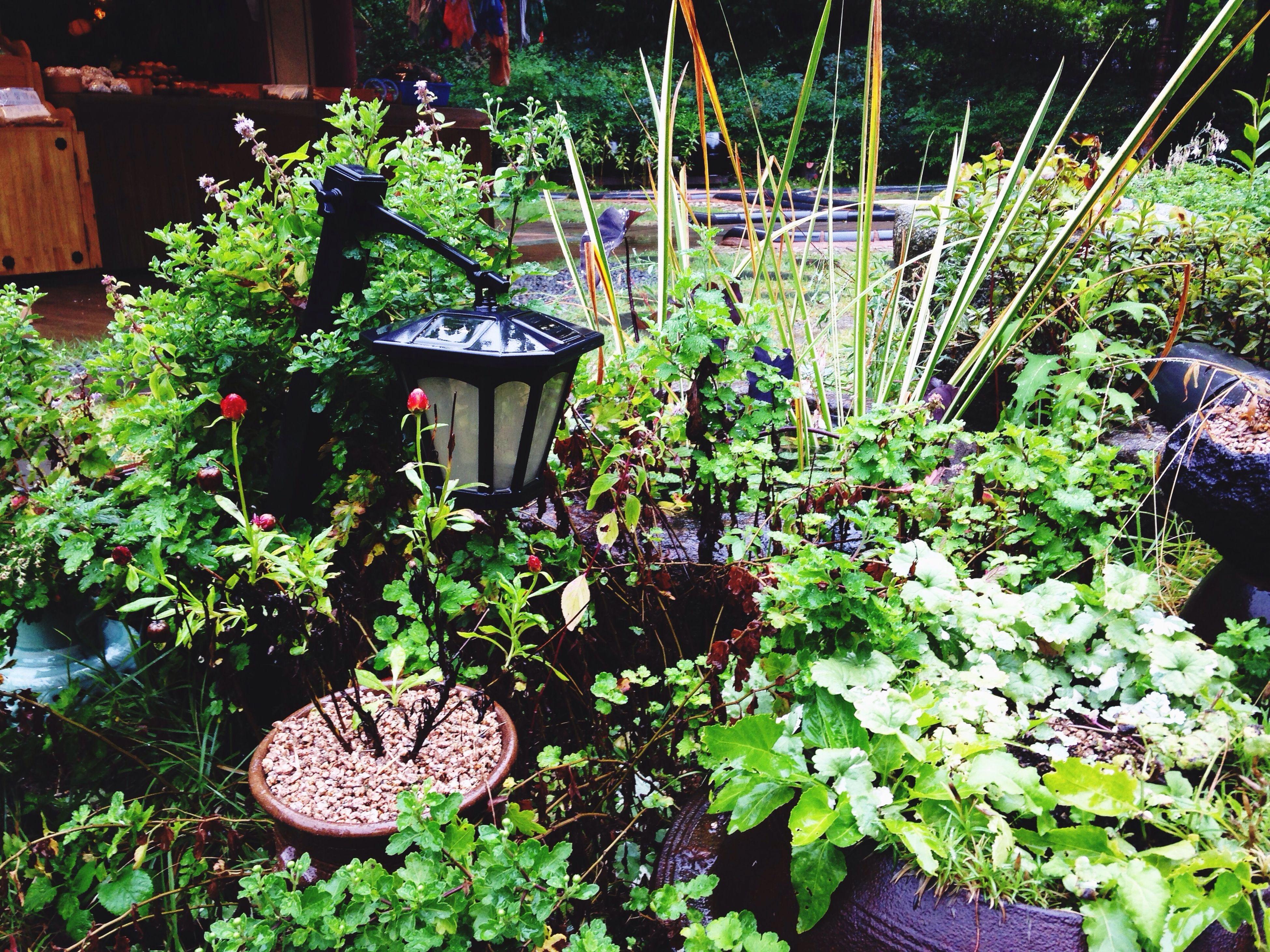 Rainy Day Green