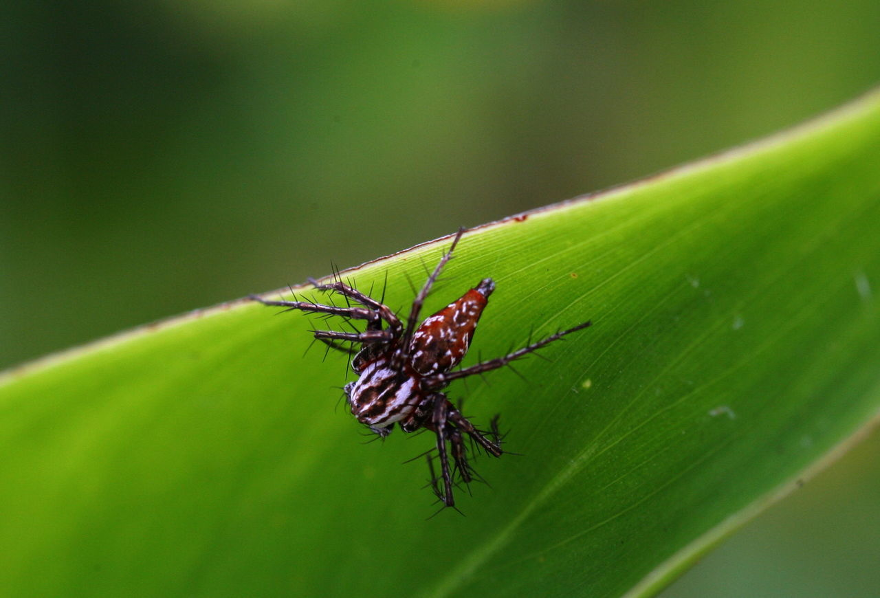 Close-up Day Focus On Foreground Insect Kenya Leaf Nature One Insect Selective Focus Spider Wildlife
