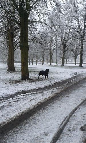 Ein wenig Schnee am Morgen Hunderunde In Deutschland Mit Meinem Hund Dog Hund