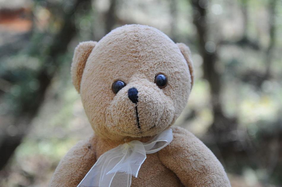 Beautiful stock photos of teddy bear, Animal Representation, Art, Brown, Close-Up