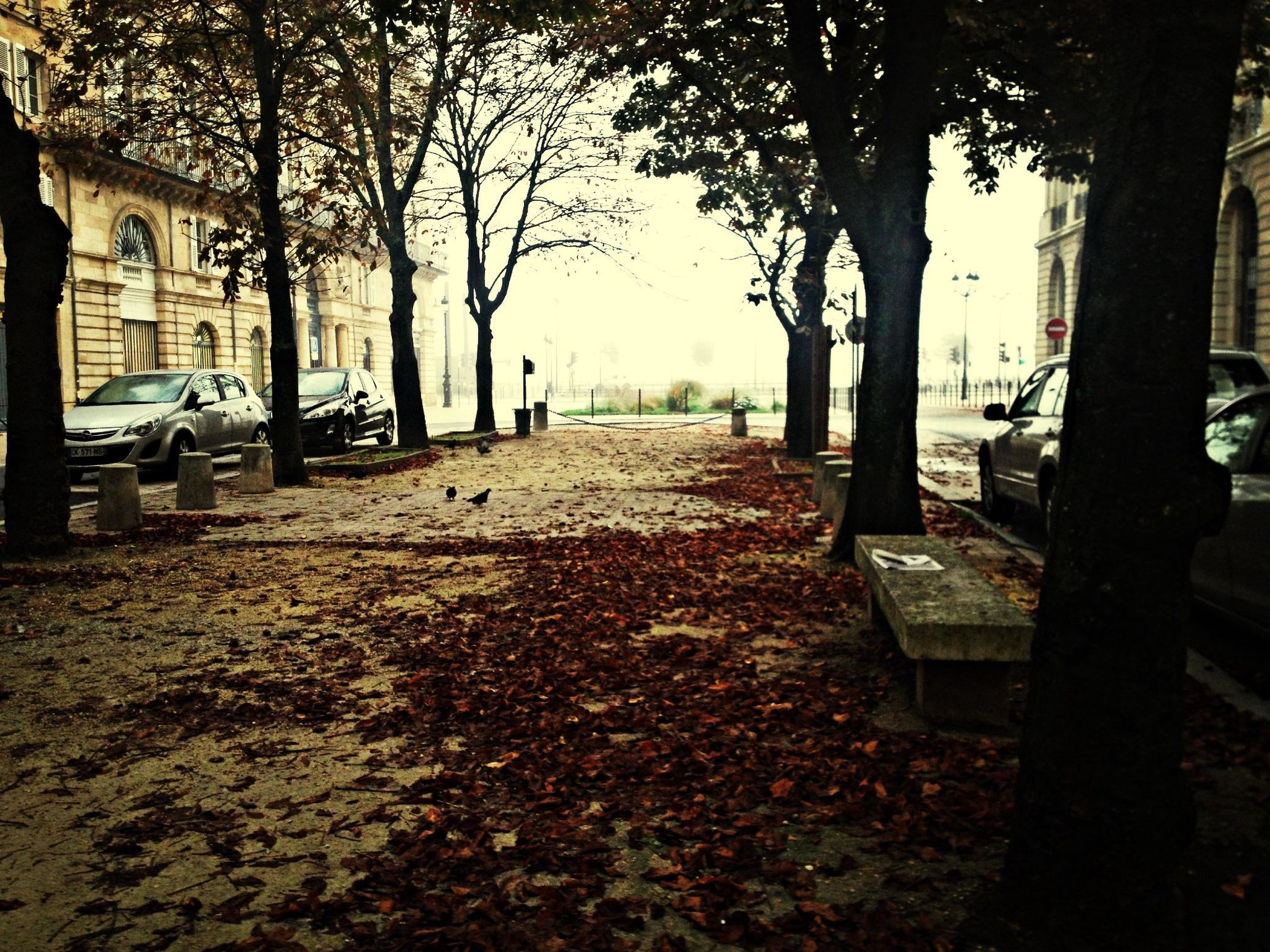 tree, the way forward, tree trunk, street, treelined, building exterior, built structure, architecture, city, autumn, road, footpath, diminishing perspective, transportation, season, empty, incidental people, street light, sidewalk, park - man made space