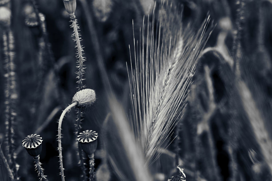 Blackandwhite Depth Of Field Ear Focus On Background Growth Nature Natures B&w New Life Plant Selective Focus