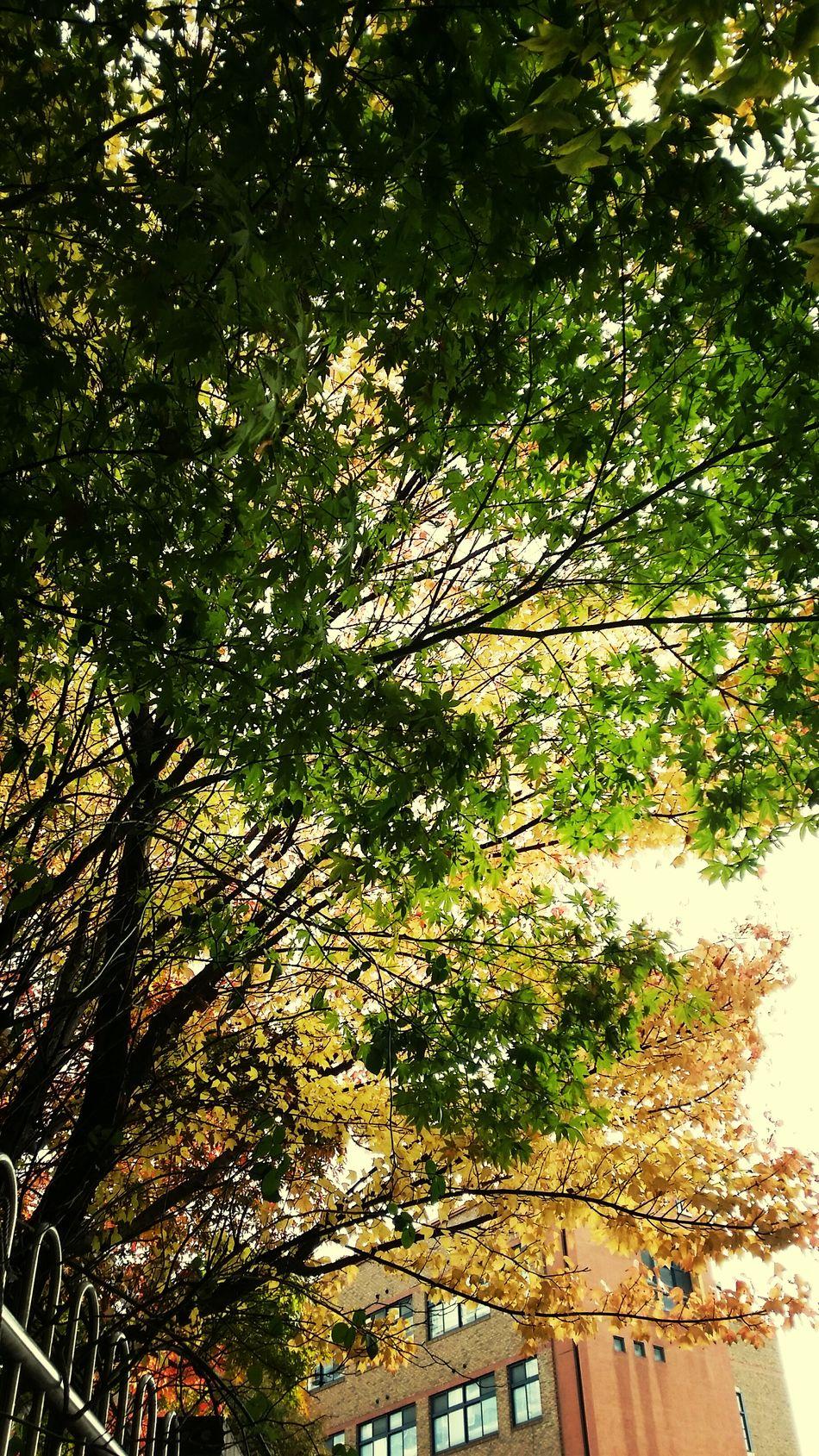 알록달록한 나무들 참 좋다. 푸르름과는 또 다른 예쁨. 가을 겨울 좋아. Fall Autumn