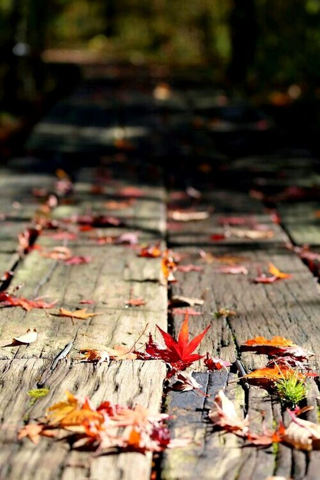 Autumn Change Leaf No People Outdoors Close-up Leaves Nature Maple Leaf Treescollection Color Palette Color Of Life Colors Of Autumn Autumn Colors Autumn🍁🍁🍁 Fall Colors