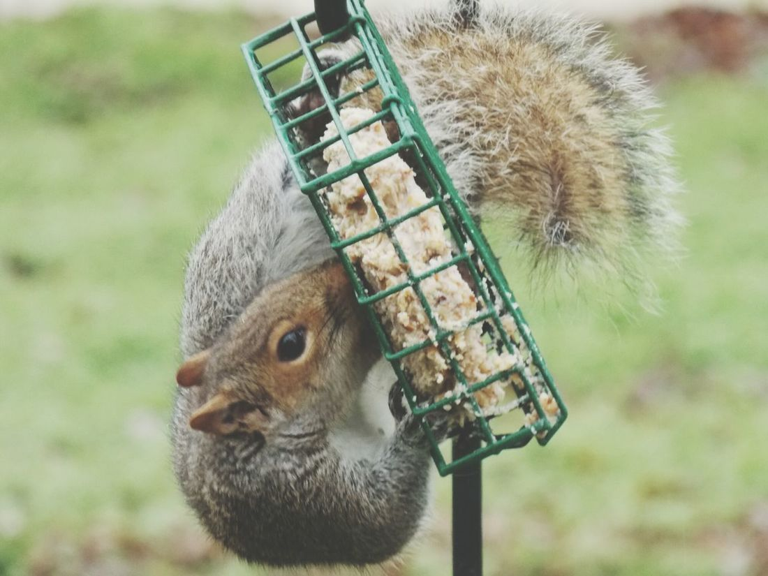 Hanging Out Showcase: January Check This Out Hello World No Edit/no Filter From My Point Of View Nature_collection Love Squirrels Looking For Peanuts Crazy Moments