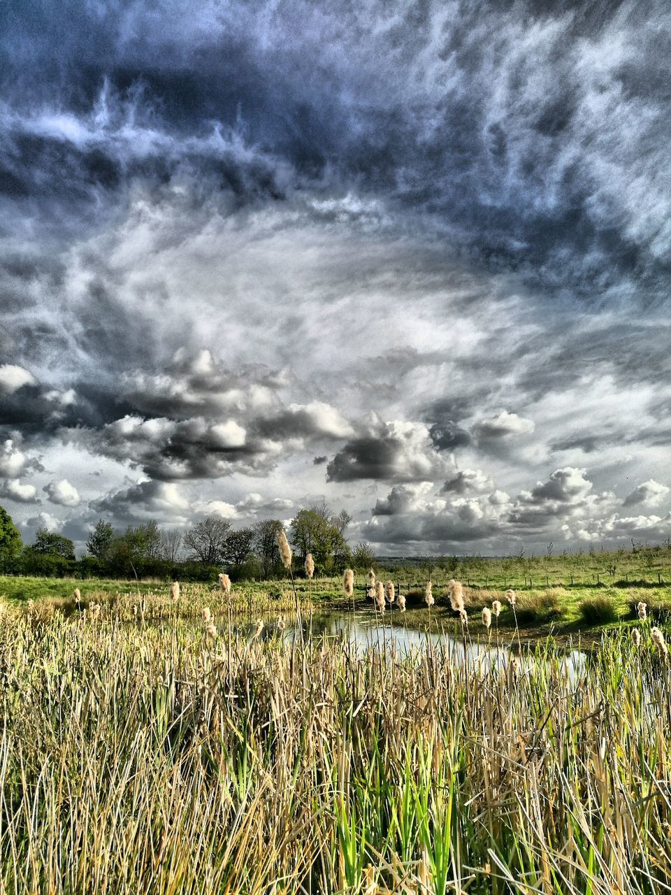 nature, agriculture, tranquility, sky, growth, tranquil scene, cloud - sky, field, scenics, beauty in nature, landscape, day, outdoors, crop, no people, rural scene, plant, grass, tree, storm cloud, cereal plant