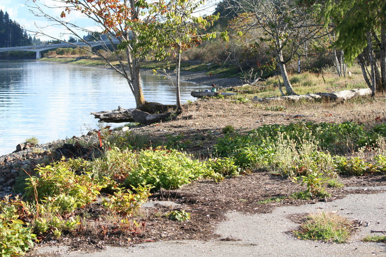 Trees Growing On Lakeshore