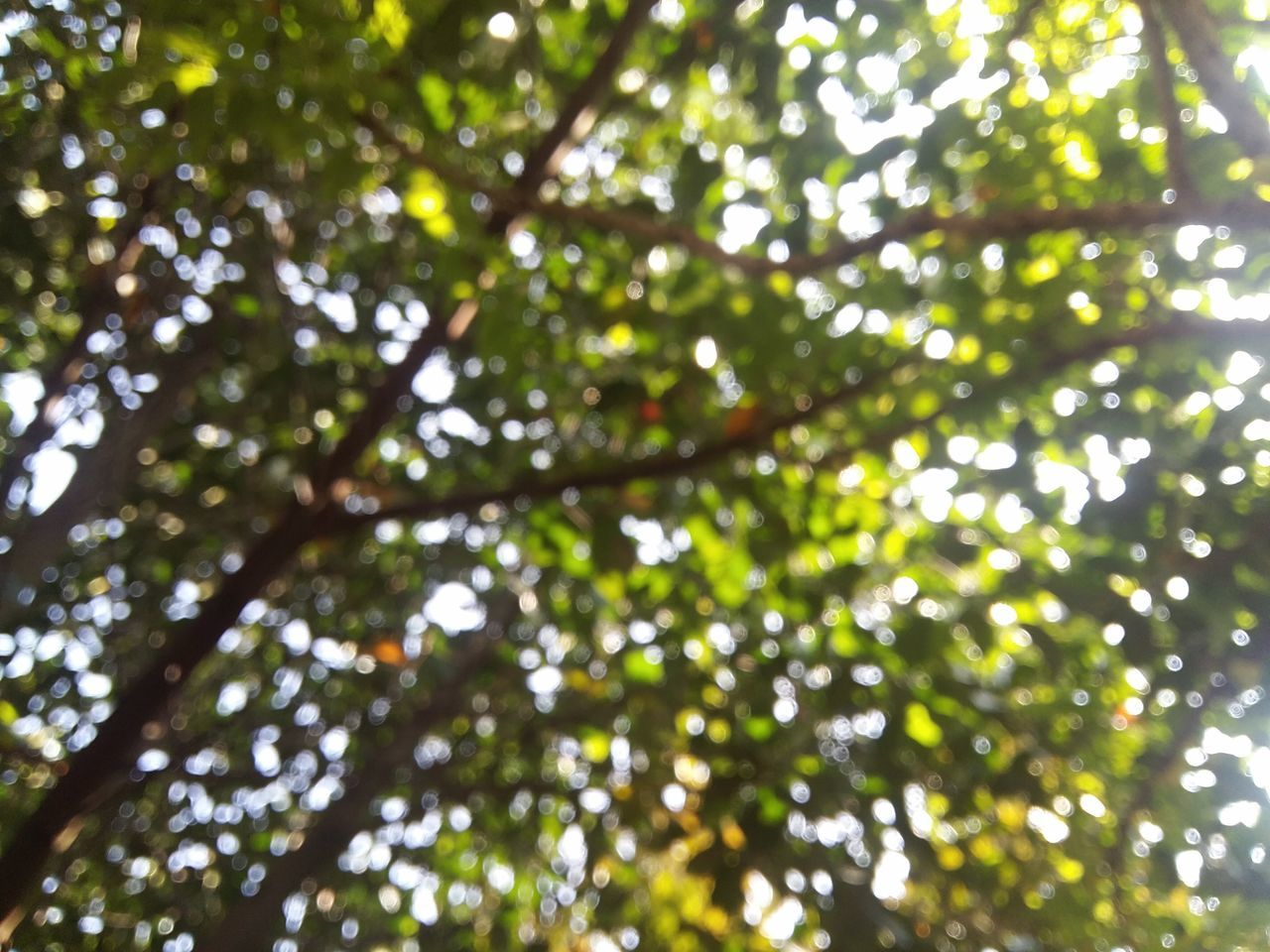 nature, day, beauty in nature, growth, low angle view, tree, leaf, forest, outdoors, no people, close-up