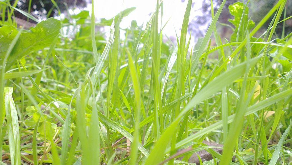 Green Green Green!  Grass Spring Rain