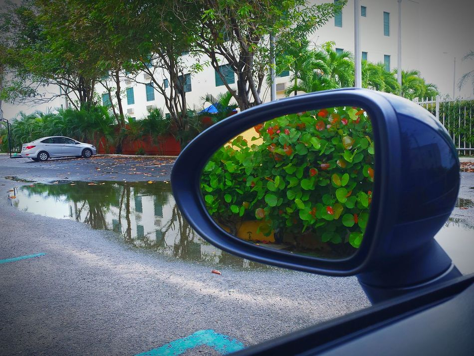 Beautiful stock photos of puerto rico, Car, Close-Up, Cropped, Day