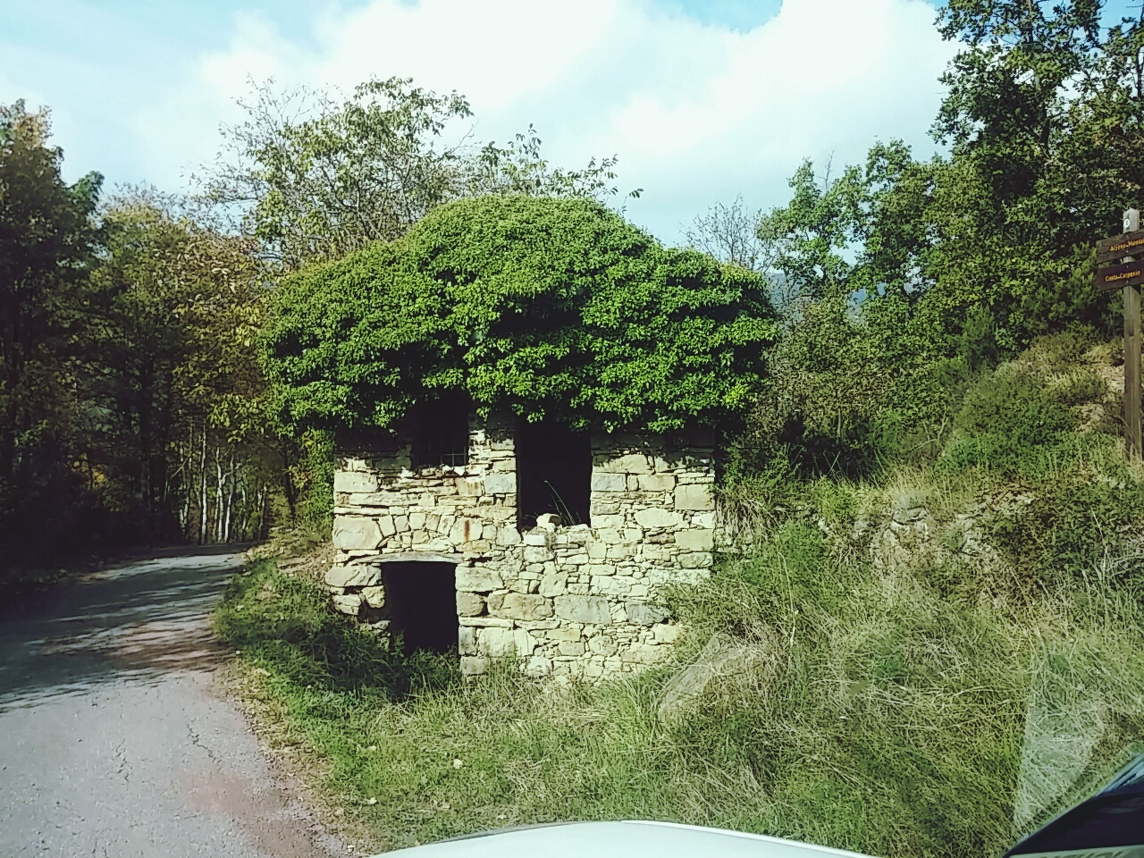tree, built structure, architecture, sky, building exterior, house, old, green color, plant, abandoned, growth, the way forward, stone wall, day, tranquility, dirt road, outdoors, nature, no people, cloud