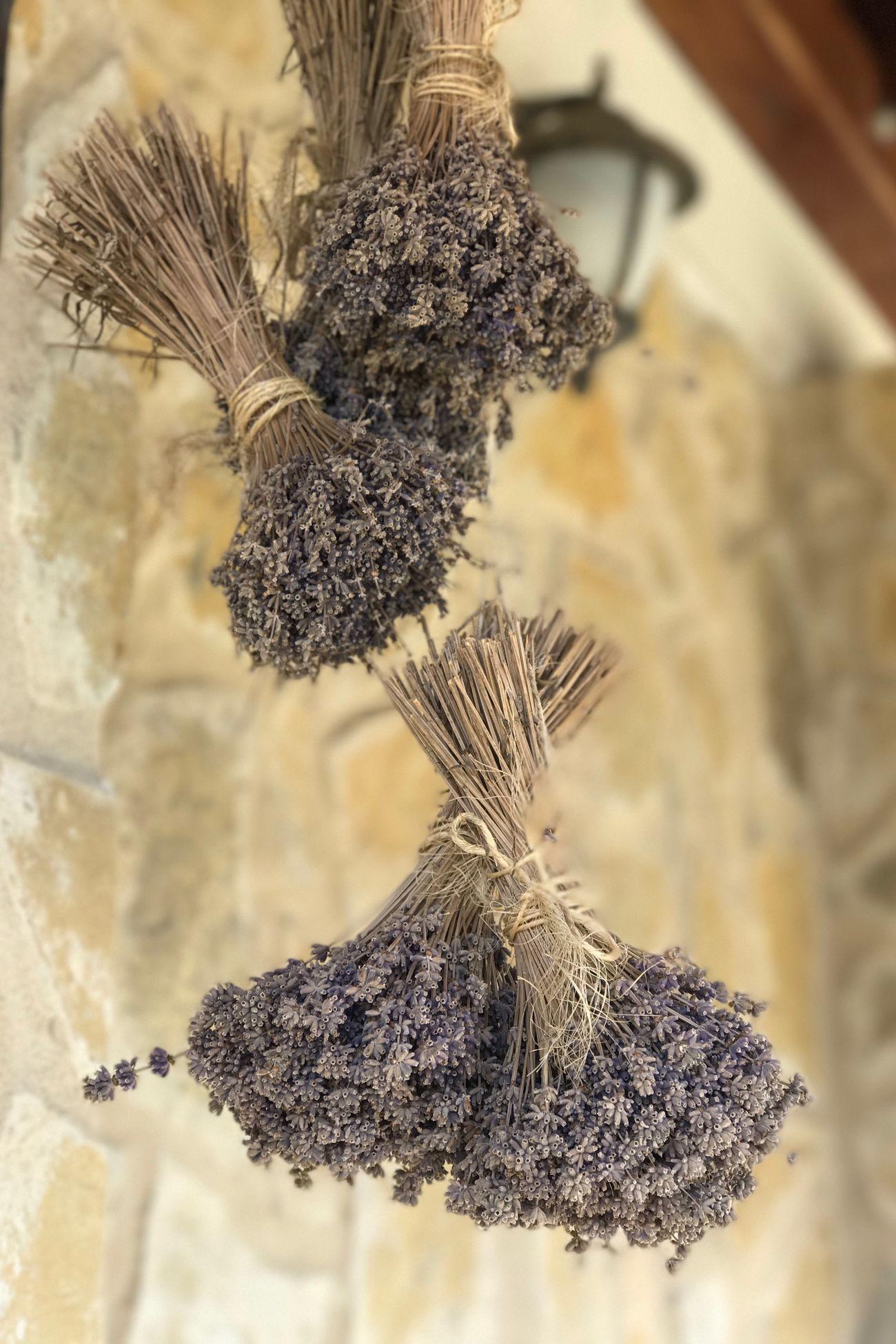 Lavanda Flower Nature Plant Beauty In Nature Flower Head