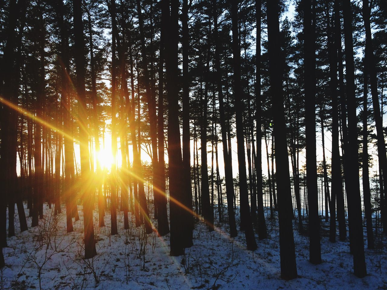 Tree Snow Nature Beauty In Nature Winter Sunlight Sun Cold Temperature Sunset Growth Scenics Outdoors Forest Non-urban Scene Sky Sunbeam Tranquility Landscape No People