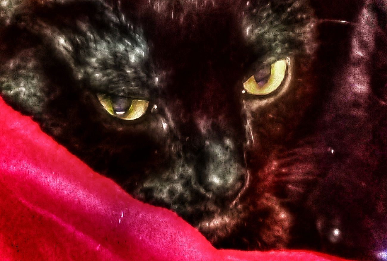 Freedom is such a cool catshe has great eyes for a black cat No People Indoors  Close-up Indoors  Animal Themes Adopt To Save A Life Black Cat Love BLackCat Eyes Of A Black Cat