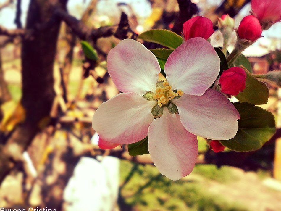 Spring Quality Time Flowers Nature