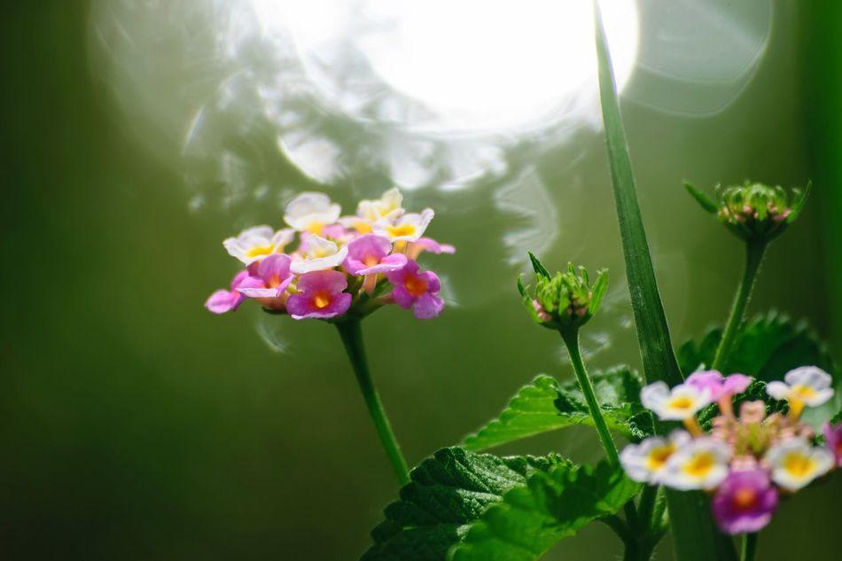 Beautiful stock photos of garden, Light, beauty In Nature, bloom, blooming