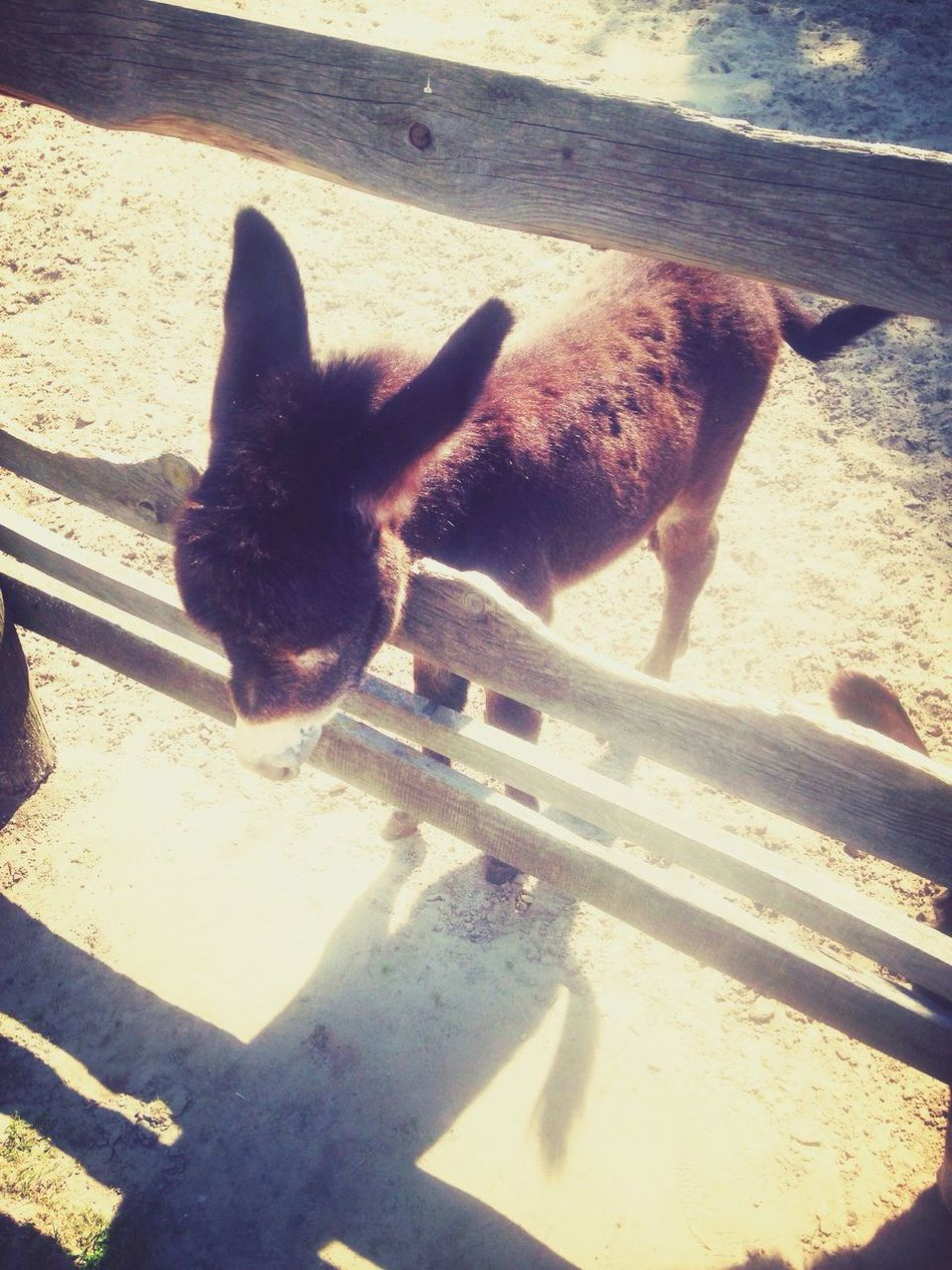Little Donkey ♡ He Was So Cute Holidays Summertime Zoo Palic Showcase June