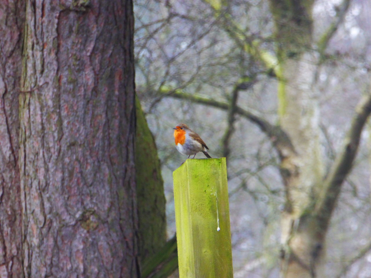 Thats enough for today & at the end this little beauty to say goodbye 🤗💕 Robin Robin Redbreast One Animal Animal Themes Bird Animals In The Wild Animal Wildlife Focus On Foreground Nature No People Wood - Material Outdoors Perching