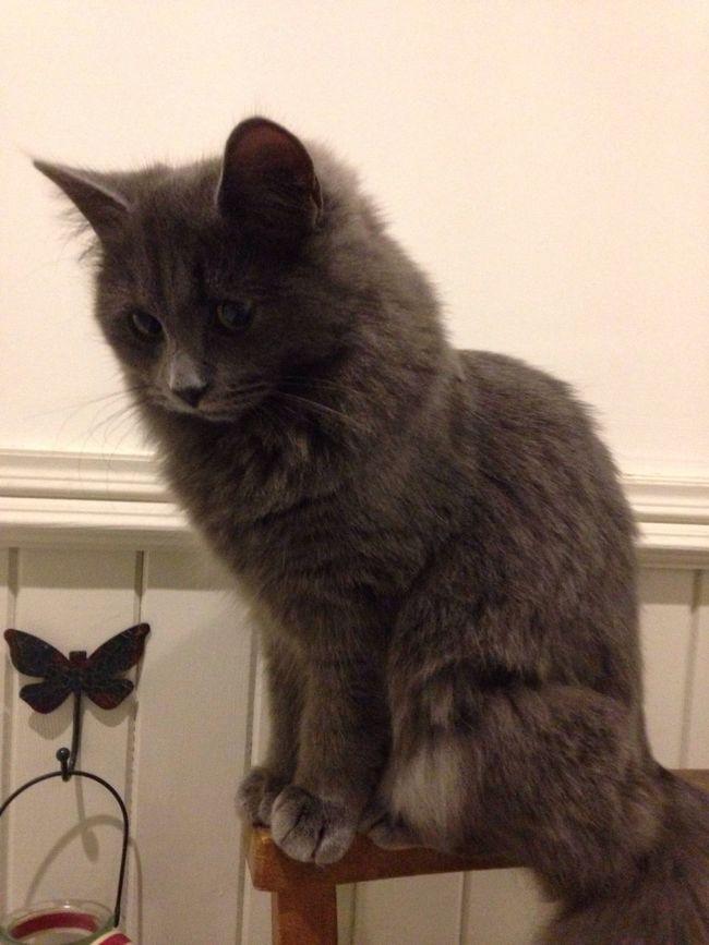 Lexi Cat Catlovers Cute Pets Enjoying Life