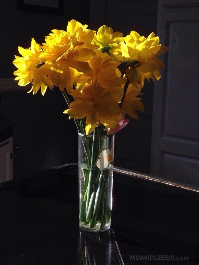 Just found this beautifully sunlit bouquet in the kitchen. Spring Flowers Mdavidleeds Photos