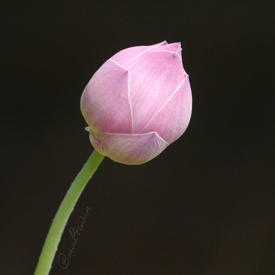 Pink Color Flower Nature Flower Head Beauty In Nature Pure And Untouched (raw Image) Lumix